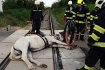 Kůň uvízl v tělese železniční trati na Rudnou.