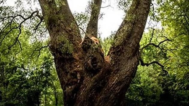 Vrba zapomenutá je významný strom druhu vrba bílá (Salix alba) v severním cípu katastrálního území Suchdol. Nachází se v Údolí Únětického potoka na soutoku Únětického a Horoměřického potoka.