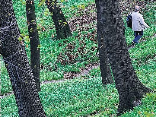 POHODA V METROPOLI. Lesy, a to i ty pražské, jsou celoročně vyhledávány jako výborné místo pro odpočinek, rekreaci i sport.