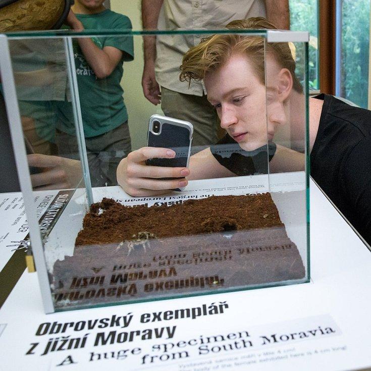 Praha jako první na světě vystavila největšího pavouka Evropy - slíďáka tatarského