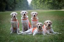 Nadační fond Mathilda cvičí vodící psy bez zbytečného stresu.