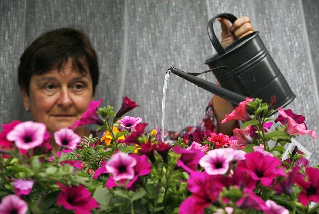 Květiny musejí být umístěny v oknech nejpozději do 5. června, poté bude následovat kontrola, kterou provede odbor životního prostředí. Výzdoba musí na oknech zůstat do 15. října.