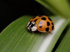 Tajemství hmyzu můžete v neděli odhalit v zoo na vycházce s entomologem.