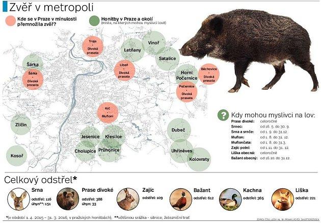 Výskyt divoké zvěře vPraze. Infografika.