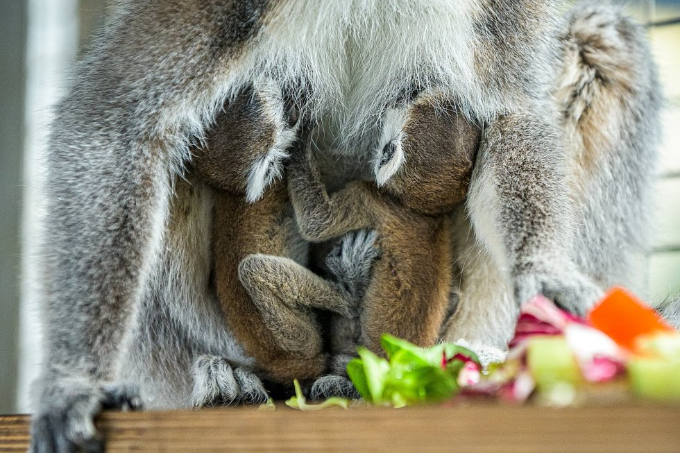 Dvojčata u své matky Móni.