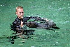 Návštěvníci se mohli v Zoo Praha rozloučit s dvouletým lachtanem Mamutem, který za pár dní zamíří do nového domova v Německu.