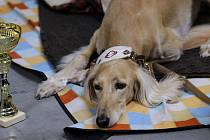 Mezinárodní Výstava psů