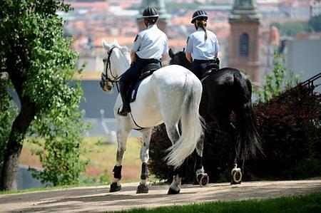 Nová posila městských strážníků v Praze 5 - starokladrubští koně.