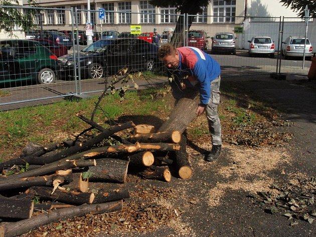 Letité nefunkční dřeviny v pražské Libni padly za oběť motorovým pilám. Plán rozsáhlé obnovy parku na náměstí Dr. Václava Holého podle radnice pamatuje i na výsadbu nových stromů. Dřeviny budou na nových místech a údajně i ve větším množství.
