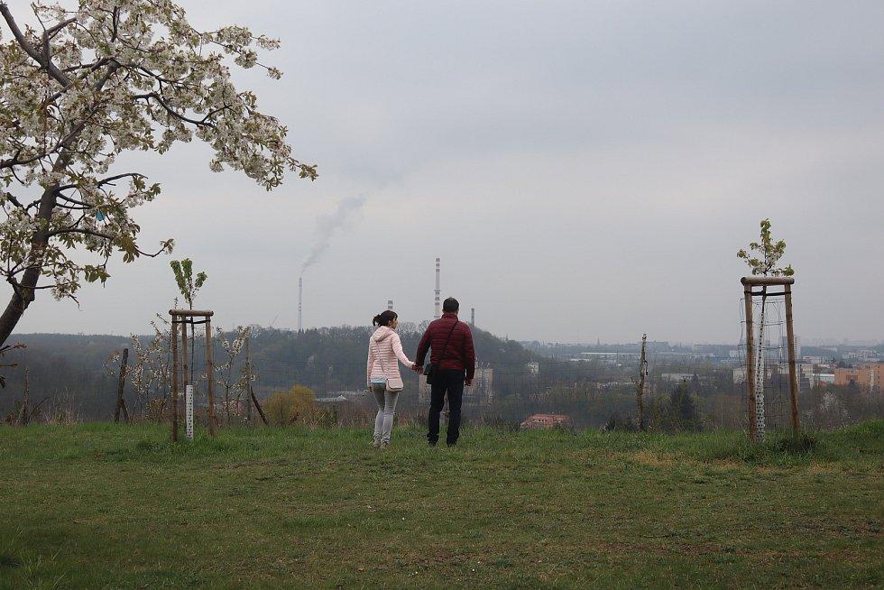 Sad Třešňovka.