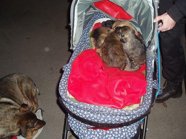 Ve strašnické ulici Na Padesátém objevili příslušníci městské policie opuštěný dětský kočárek, u kterého seděl pes. A to nebylo vše