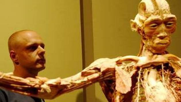 Kontrovezní výstava plastinovaných těl míří do Prahy.