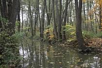 Meandry Botiče byly v 60. letech prohlášeny za chráněnou přírodní památku. Její rozloha je 6,7 hektaru a je součástí přírodního parku Hostivař.