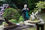 Z výstavy bonsají v pražské botanické zahradě.