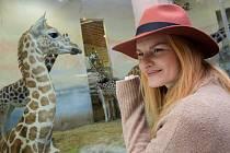 Jméno žirafy severní núbijské narozené 25. ledna – Nela – slavnostně odhalila její kmotra, herečka Iva Pazderková.