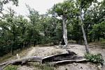 Kunratický les. Ilustrační foto.