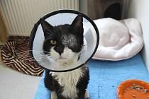Kocourek Žižka je po operaci oka a hledá nový domov.