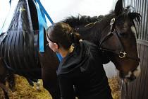 Ošetření zraněného koně v Radotíně.