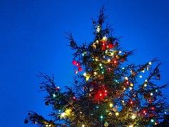 Tradiční vánoční strom se vZoo Praha rozsvítí v neděli 27.11.