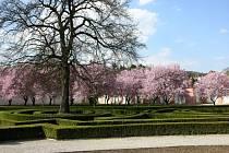 Víkend otevřených zahrad si můžete užít po celé Praze.