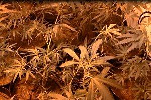 Marihuana ve vile v Suchdole