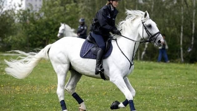 Město koupilo městské policii kladrubské bělouše k hlídkování v Praze 11.