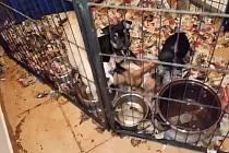 Psi žili v otřesných podmínkách.