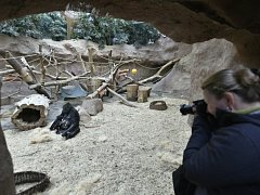 Pavilon goril v Zoo Praha. Ilustrační foto.