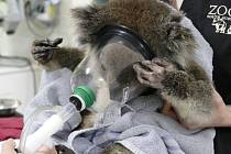 Sto tisíc australských dolarů jde také do Adelaide Zoo. Z nich polovina je určena na pomoc poskytovanou zvířatům na veterinární klinice této zoo a rovněž na péči o postižené koaly z oblasti Mount Lofty Ranges.