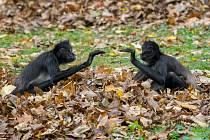 Podzim je ideálním obdobím pro návštěvu Zoo Praha. Velmi zajímavou podívanou nabízejí například tzv. opičí ostrovy.