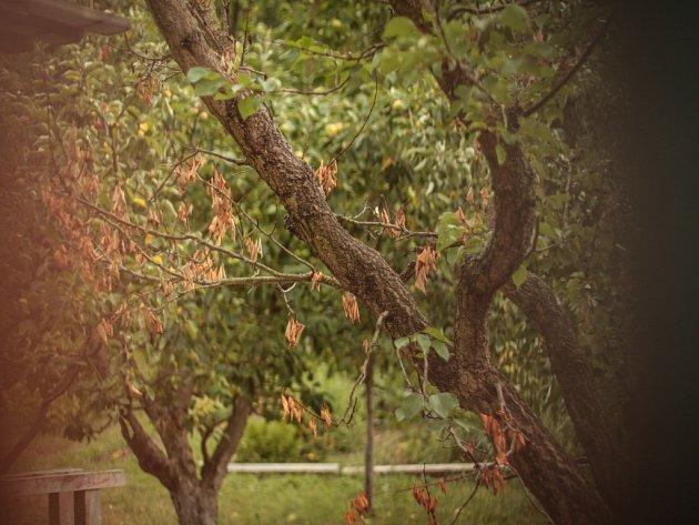 Stromy. Ilustrační foto.