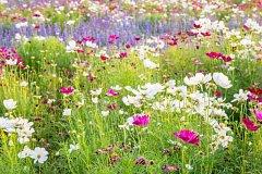 Květinový jarmark