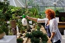 Výstava bonsají začala 23. srpna v botanické zahradě na Slupi v Praze.