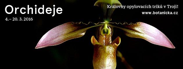 Pozvánka na výstavu orchidejí vBotanické zahradě vPraze.