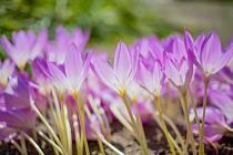 Další díl přednášek Botanické zahrady bude tentokrát na téma Jedovaté rostliny kolem nás a jejich terapeutický potenciál.