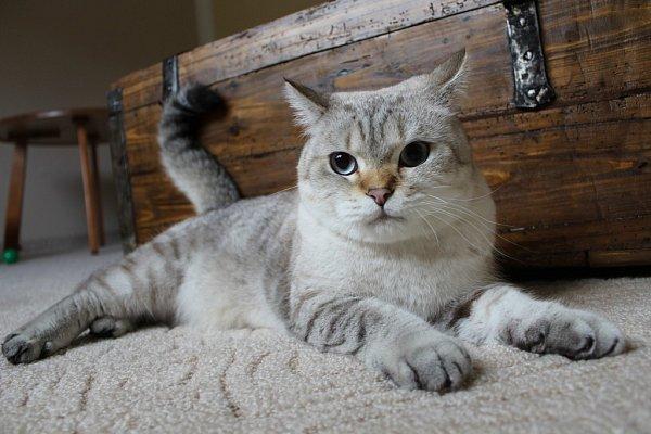 Miss Kočka