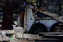 LAHOVIČKY. Domácí zvířata žijí v oploceném areálu plném starého železného šrotu a jiného odpadu v Lahovičkách.