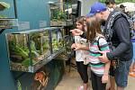 Tak pestrá kolekce dosud v Česku nebyla představena. Výstava Šípové žáby, která byla slavnostně otevřena v sobotu odpoledne, potrvá v Galerii Gočárovy domy do 20. října.