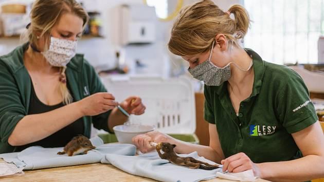 S pandemií koronaviru přibyli v Praze i zvířecí pacienti. Živočichové nemají v přírodě klid.