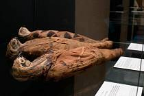 Zvířecí mumie