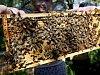 Včelařská práce i anatomie. To vše zájemcům ukáží studenti veteriny