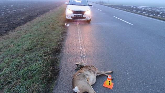 Největší riziko nehody se zvěří? Právě nyní. Repelenty u silnic fungují krátce