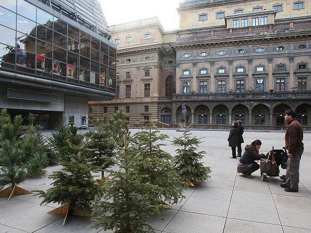 Piazzetu Národního divadla zdobí zrecyklované vánoční stromky.