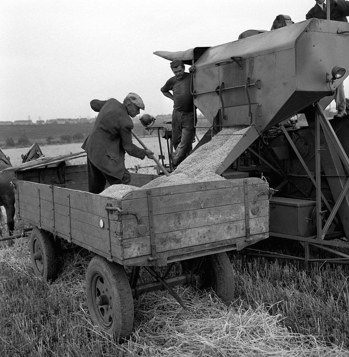 Sklizeň 1960. Malešice byly po dlouhá léta zemědělskou oblastí a tento ráz si udržely po většinu 20. století.