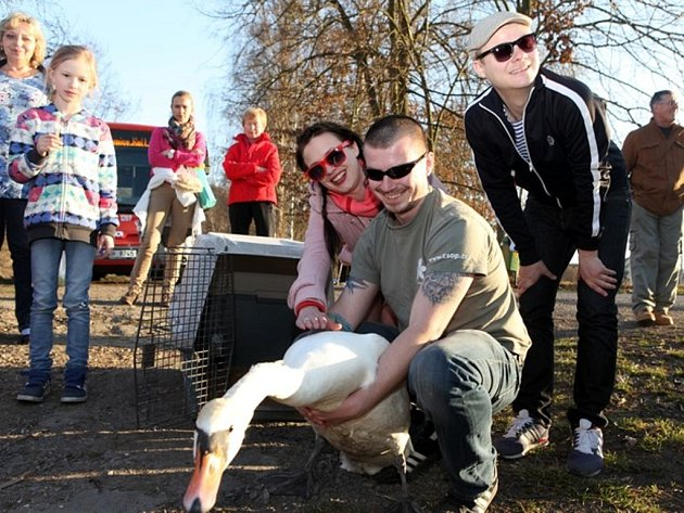 Labuť velkou po čtrnáctidenní léčbě vypustili zpět na Vltavu známí herci Kristýna Leichtová a Filip Kaňkovský. Ti se akce neúčastnili jen na efekt, v minulosti už oba projevili zájem o podporu činnosti Pražské zvířecí záchranky.