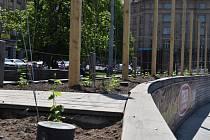 Budoucí chmelová stěna na Vítězném náměstí.