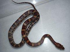 Hada na zábradlí si všimla obyvatel domu na Břevnově