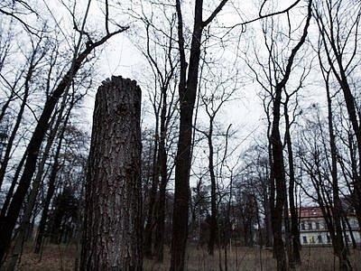 ÚDRŽBA, NEBO KÁCENÍ? Inspekce životního prostředí dočasně pozastavila práce v zámeckém parku v Hostavicích. Radnice jí příští týden musí doložit potřebné doklady o kácení stromů.