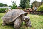 Samec želvy sloní Eberhard – pravděpodobný rekordman.