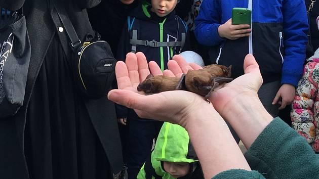 Na vypouštění netopýrů se přišly podívat desítky dětí i rodičů